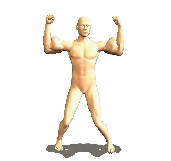 karate muscles